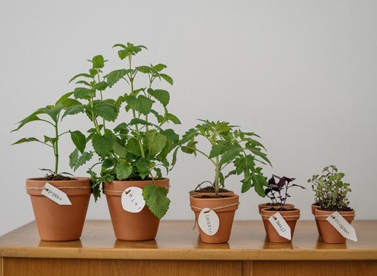 Which herbs and plants can help relieve joint and muscle pain?