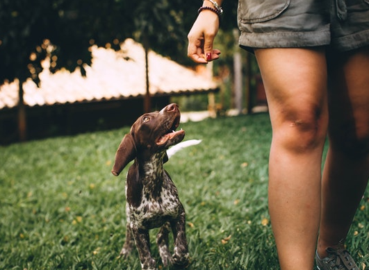 What is animal-assisted therapy?
